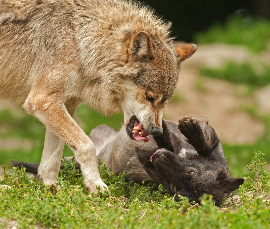 animal-attack-battle-2365
